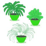 Placez de trois plantes ornementales de jardin d'intérieur avec le feuillage luxuriant dans des pots de fleur de couleur verte su illustration stock