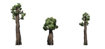 Placez des arbres géants de séquoia illustration stock