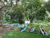 Placez des bateaux abondants sous un arbre, région peu profonde du lac photos stock