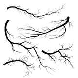 Placez des brindilles sèches, sur le fond blanc Silhouette de branche d'arbres, d'isolement illustration stock