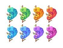 Placez des caméléons colorés se reposant sur des branches images libres de droits