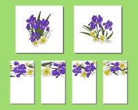Placez des cartes avec des fleurs d'iris et de narcisse illustration libre de droits