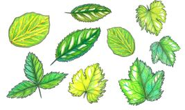 Placez des feuilles de fruit d'aquarelle illustration libre de droits