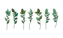 Placez des feuilles de laurier illustration libre de droits