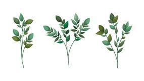 Placez des feuilles de laurier illustration de vecteur