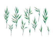 Placez des feuilles de laurier illustration stock