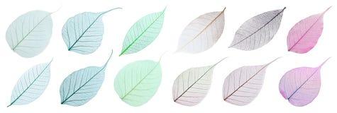 Placez des feuilles squelettiques décoratives sur le fond blanc photographie stock libre de droits