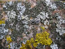 Placez des lichens de différentes couleurs photos stock