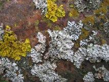 Placez des lichens de différentes couleurs images stock