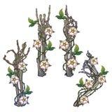 Placez des mains squelettiques avec de divers gestes décorées des guirlandes de chien-rose Dessin linéaire coloré d'isolement sur illustration de vecteur