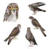 Placez des oiseaux de la proie illustration stock