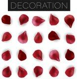 Placez des pétales rouges réalistes de fleur d'isolement sur le fond blanc, feuille florale illustration stock