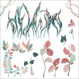 Placez des plantes tropicales de différentes espèces illustration stock