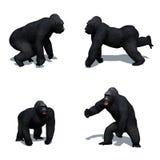 Placez du gorille dans différents mouvements avec l'ombre sur le plancher sur le fond blanc illustration de vecteur