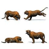 Placez du tigre dans différents mouvements avec l'ombre sur le plancher sur le fond blanc illustration de vecteur
