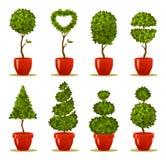 Placez l'arbre dans un pot Image stock