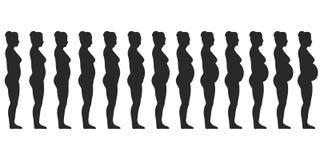 Placez la silhouette de l'les femmes féminines enceintes, changements d'un corps du ` s de femme pendant la grossesse Images stock