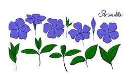 Placez les éléments d'isolement du bigorneau fleurs, bourgeons et feuilles de vinca Image libre de droits