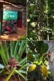 Placez les épices de plantation Photographie stock