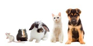 Placez les animaux familiers image libre de droits