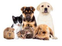 Placez les animaux familiers photos libres de droits
