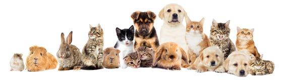 Placez les animaux familiers image stock