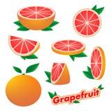 Placez les autocollants de l'agrume frais fruit coupé en tranches et entier de pamplemousse avec la peau avec des feuilles de ver illustration libre de droits
