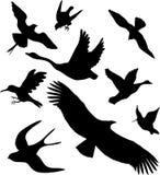 Placez les boutons - 13C. Oiseaux Images libres de droits
