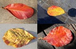 Placez les feuilles d'automne Photographie stock