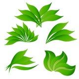 Placez les feuilles vert clair de logo illustration stock