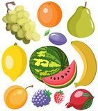 Placez les fruits illustration de vecteur