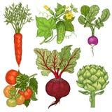 placez les légumes Carotte, concombre, radis, tomate, betterave, arti Image stock