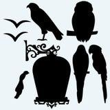 Placez les oiseaux : aigle, hibou, perroquets et mouettes Photographie stock libre de droits