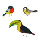 Placez les oiseaux bouvreuil, moineau, vecteur de perroquet Image stock