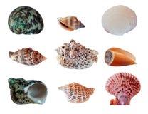 Placez les seashells Image stock