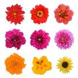 Placez neuf fleurs images libres de droits