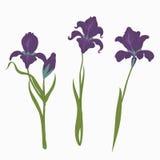 Placez trois iris sur le fond blanc, style plat moderne d'une illustration, vecteur floral illustration de vecteur
