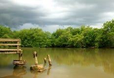 Placid. A placid mangrove at Aguadilla, Puerto Rico Royalty Free Stock Images