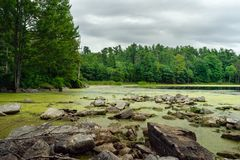 Placid lake shoreline with algae royalty free stock image
