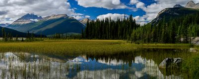 Placid pond, jasper national park, canada royalty free stock photos