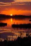 Placidity. A placid scene on a marsh at sunset stock photos