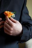 Placing The Boutonniere. Man putting a boutonniere in place for a wedding Royalty Free Stock Photos
