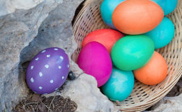Placing eggs for egg hunt Stock Images