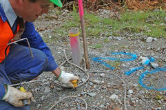 Placing geophones. Man places geophone in ground at hole 210 for seismic test, Westland, New Zealand Stock Images