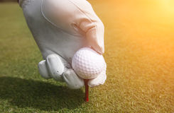 Placing golf ball on a tee. Close up Royalty Free Stock Images
