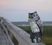 Sentinel Owl stock image