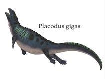 Placodus Dinosaur with Font Stock Image