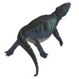 Placodus Dinosaur Tail Stock Images