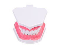 Plactis denture. Stock Photos