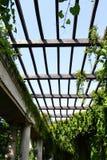 Plafond de trellis dans la galerie avec le lierre Photographie stock